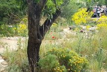 Drought Tolerant Plants and Gardens / Drought tolerant plants that won't require additional watering.