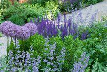 Gardening - Stauder og planter