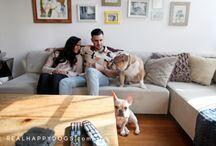 Giuseppe and Lois / French Bulldog and English Bulldog living in Williamsburg, Brooklyn