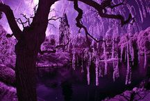 Colours ~ Purple/Lavender / by Mary Donnelly