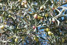 productos naturales y directos del arbol / el sabor de la naturaleza