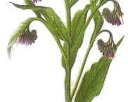 Léčive rostliny