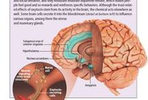 Brain & brainpower