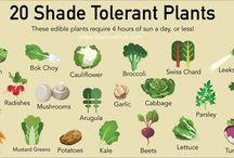 Shade Tolerant Plants