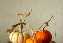 Pumpkins, Squash and Gourds / by katherine schaffer