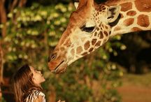 Giraffe Manor / Travel Travel Travel. We are experts in luxury travel. Www. Boutiquetravel.net