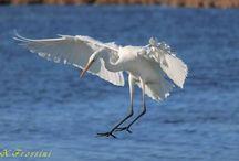 Υδρόβια πτηνά κ.α. στη Λευκάδα