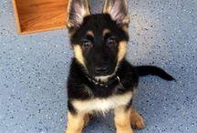 I want a puppy! / by Jennifer Parkinson