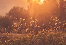 Quirkies_sunrise
