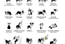 Boston terriers / by Tina Reints