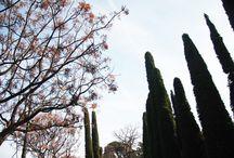 ー botanical garden / Jardín Botánico de Valencia