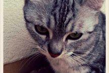Mela_my cat