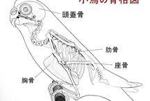 動物骨描きかた