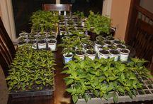 Jardines y Vegetación