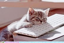 Cats on Keyboards / it's an epidemic / by Tessa