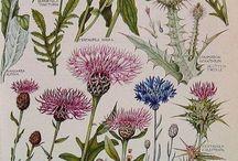 botanic stamps