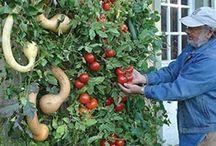 zahradničím