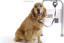 Dog Collars Leashes