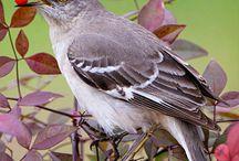 Canadian_birds