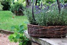 Garden / Planting