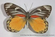 The Butterfly Effect / A kaleidoscope of butterflies from the RAMM collections