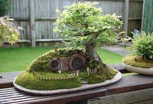 Bonsai Trees / Best soil Potting, Pruning Patting and taking care of the Bonsai Tree / by WUELLA BORRERO