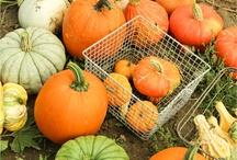 Perfectly Pumpkin...