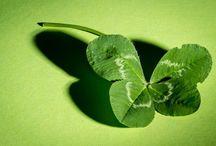 plante norocoase