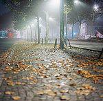 Ночные виды