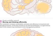 School en leren: brein