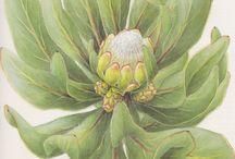 Botanical...Scientific Illustration