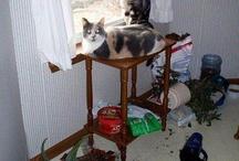 01 Cats & Cats