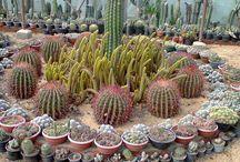 Deco plantas