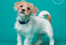 Hand-In-Paw Rescue / Photos of adoptables through Hand-In-Paw Rescue