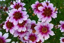 Flowers - Landscape