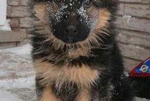 De magnifiques chiens