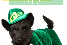 St. Patrick's Day Pets / Safe and fun ideas for all your pets to have the Luck o'the Irish!