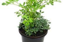 nombres de plantas