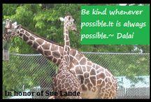Kindness Quotes / Spreading Kindness kindness2scatter.wordpress.com Website facebook.com/SpreadingKindnessLande Facebook twitter.com/givenot2receive @givenot2receive In  honor of Susan Burghardt Lande  / by Bipolar Bandit & Mental Health