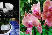 orhidea gondozása