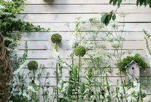 Garten Pflanzung