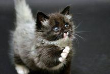 Állatok / Főleg cicák! De mindenféle állat lehet itt