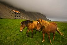 Horses etc. / Beautiful Animals / by Barbara Roy
