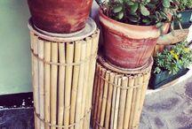 cane bambù