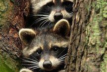 cute animals - cuki állatos