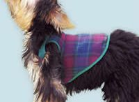 Strihy a oblečenie na psíkov