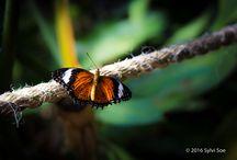 Wildlife & Landscape Photography
