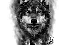 lobos wolf, leones, tigres..
