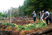 Permaculture / Permaculture: Permanent culture or agriculture. A concept for life in general and gardening in particular.