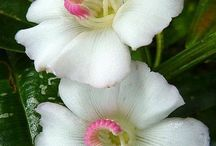 Flowers and nature / About beautiful flowers, trees , plants from all over the world
